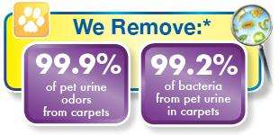 We remove 99.9% pet urine odor